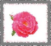 Uma rosa em uma estrutura Fotos de Stock