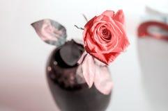 Uma rosa molhada do vermelho no vaso no fundo branco borrado Efeitos da lente do foco seletivo imagens de stock royalty free