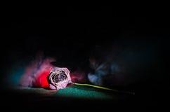 Uma rosa murchando significa amor perdido, divórcio, ou um relacionamento mau, mortos aumentou no fundo escuro fotografia de stock royalty free