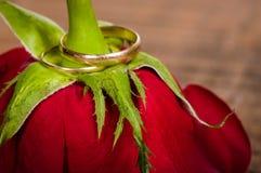 Uma rosa vermelha com faixas do ouro Imagem de Stock Royalty Free