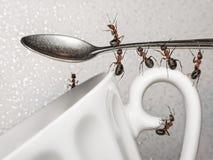 Uma ruptura, equipe das formigas e colher sobre o copo de café Imagens de Stock Royalty Free