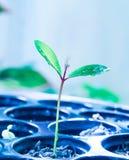 Uma ?rvore pequena que cresce de uma semente pequena foto de stock royalty free