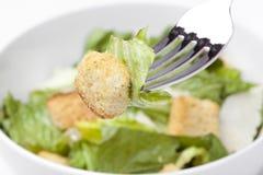 Uma salada verde fresca Imagens de Stock
