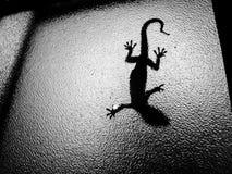 Uma salamandra em uma janela fotografia de stock