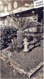Uma Savannah Yard Fotografia de Stock
