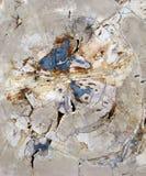 Uma seção do corte da cruz da madeira de Fosillized foto de stock royalty free