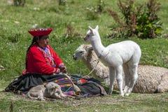 Uma senhora peruana com os lamas perto de Cusco no Peru Imagem de Stock Royalty Free