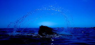 Uma sereia emerge do mar & do x28; 6& x29; Fotos de Stock