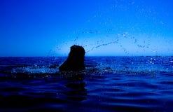 Uma sereia emerge do mar & do x28; 14& x29; Fotografia de Stock Royalty Free