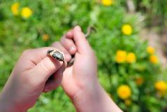 Uma serpente de grama babyish da preensão da mão fotografia de stock royalty free