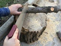 Uma serra de mão nas mãos vê um log que encontra-se em um coto fotos de stock