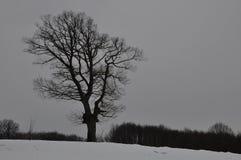Uma silhueta de uma árvore Imagens de Stock Royalty Free