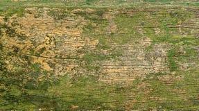 Uma superfície de madeira velha do verde Imagens de Stock Royalty Free