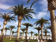 Uma tarde com palmeiras enormes Fotos de Stock