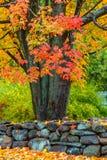 Uma tarde do outono em Massachusetts suburbano - 3 imagem de stock royalty free
