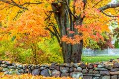Uma tarde do outono em Massachusetts suburbano - 6 fotografia de stock royalty free