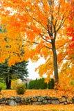 Uma tarde do outono em Massachusetts suburbano - 1 fotografia de stock