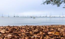 Uma tarde nebulosa do outono Imagem de Stock Royalty Free