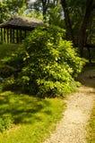 Uma tarde no jardim botânico imagem de stock royalty free