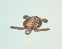 Uma tartaruga de mar Fotos de Stock
