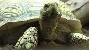 Uma tartaruga ou uma tartaruga filme