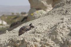 Uma tartaruga que move stubbornly o monte no dia ensolarado Imagens de Stock