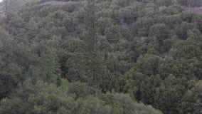 Uma terra estéril do deserto com alguns arbustos pequenos do céu vídeos de arquivo