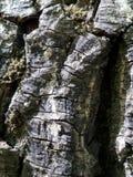 Uma textura da casca de árvore Fotografia de Stock Royalty Free