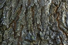 Uma textura da casca de madeira velha Fotografia de Stock