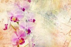 Uma textura do cartão com as orquídeas românticas macias do vintage ramifica para o dia, o aniversário ou o casamento de Valentim fotos de stock royalty free