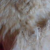 Uma textura maravilhosa de um gato imagens de stock royalty free