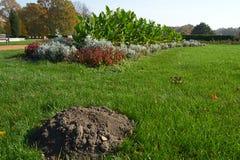 Uma toupeira da toupeira em um gramado bem conservado do parque fotos de stock royalty free
