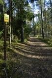 Uma trilha na floresta Imagens de Stock Royalty Free