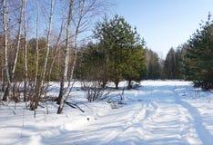 Uma trilha na neve que conduz através da floresta fotografia de stock royalty free
