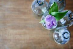 Uma tulipa violeta no grupo do uso criativo das garrafas vazias do foco imagem de stock royalty free