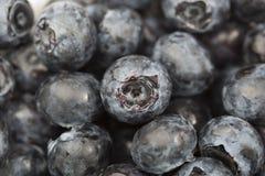 Uma uva-do-monte fresca Imagens de Stock Royalty Free