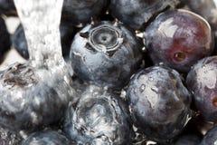 Uma uva-do-monte fresca Fotografia de Stock Royalty Free