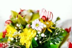 Uma variedade de amor floresce ao começo da mola Foto de Stock Royalty Free