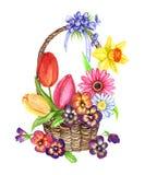 Uma variedade de flores da mola: tulipas, pansies, violetas, margarida, gerbera, narciso em uma cesta de vime Imagem de Stock Royalty Free