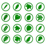 Uma variedade de folhas do verde Imagens de Stock Royalty Free