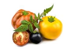 Uma variedade de tomates frescos varicoloured é isolada em um fundo branco foto de stock