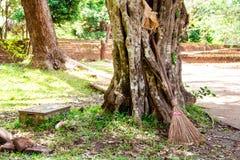 Uma vassoura da palha ajustou-se para descansar em uma grande árvore velha no sol do meio-dia imagem de stock royalty free