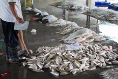 Uma verificação que do pescador um grupo de peixes se prepara para a venda por atacado para oferecer. Imagem de Stock