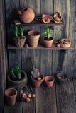 Uma vertente velha com potenciômetros e mola de argila em plantas Imagem de Stock