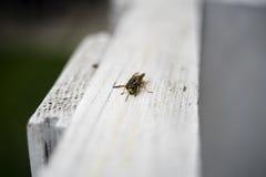Uma vespa em uma placa branca imagens de stock royalty free