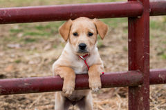 Uma vez em uma vida do filhote de cachorro imagens de stock