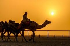Uma vida do deserto Fotos de Stock