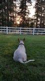 Uma vida dos cães Imagem de Stock