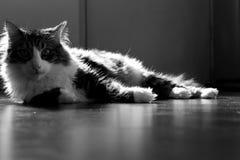 Uma vida dos gatos Fotografia de Stock