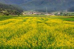 Uma vila bonita Imagem de Stock